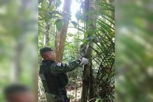 Batalhão Ambiental resgata bicho-preguiça na Avenida das Flores