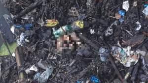 Crânio é encontrado em área de mata no Aleixo