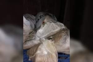 Polícia apreende 989 quilos de pirarucu seco em embarcação no porto de Maraã
