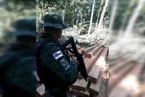 Polícia desarticula grupo criminoso responsável por desmatamento ilegal na RDS Rio Negro