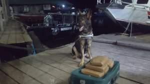 Polícia e Receita Federal apreendem 6 quilos de maconha skunk em barco no porto de Manacapuru