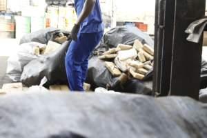 Polícia incinera mais de uma tonelada e meia de maconha apreendida