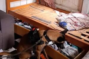 Polícia Militar deflagra Operação Ratoeira e detém traficantes em Parintins