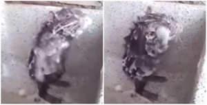 Vídeo de rato tomando banho viraliza na internet